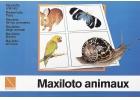 Maxiloto de los animales