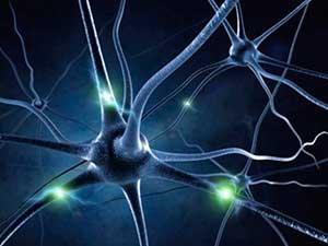 Plasticidad neuronal y envejecimiento exitoso (Parte I)