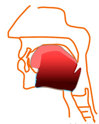 Fig. 9: Posición ideal de la Lengua cuando la cavidad oral lo permita.