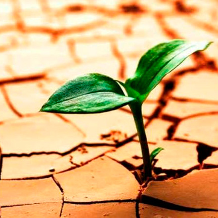 Resiliencia a las dificultades y estrés psicosocial