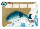 Pescadito, Pescadito - Little Fishie - Petit poisson, petit poisson - Fischlein Fischlein Cuento para Kamishibai A3 con CD (Es/En/Fr/De)